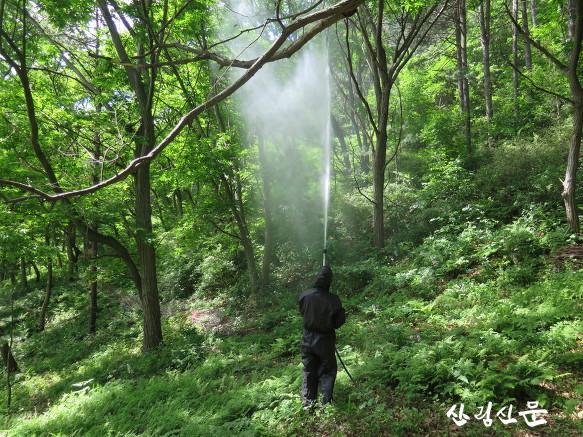 강릉병해충예방34.jpg