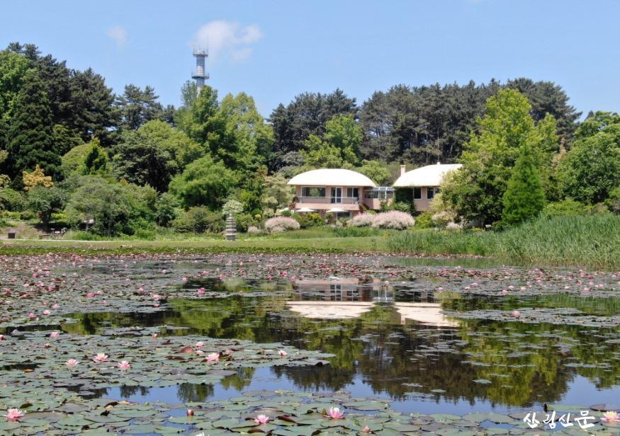 크기변환_수련으로 가득한 천리포수목원 큰 연못 전경.jpg