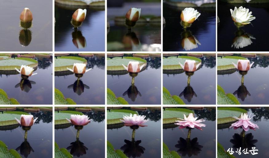 [크기변환]re빅토리아 크루지아나 이틀간의 색 변화 15컷.jpg