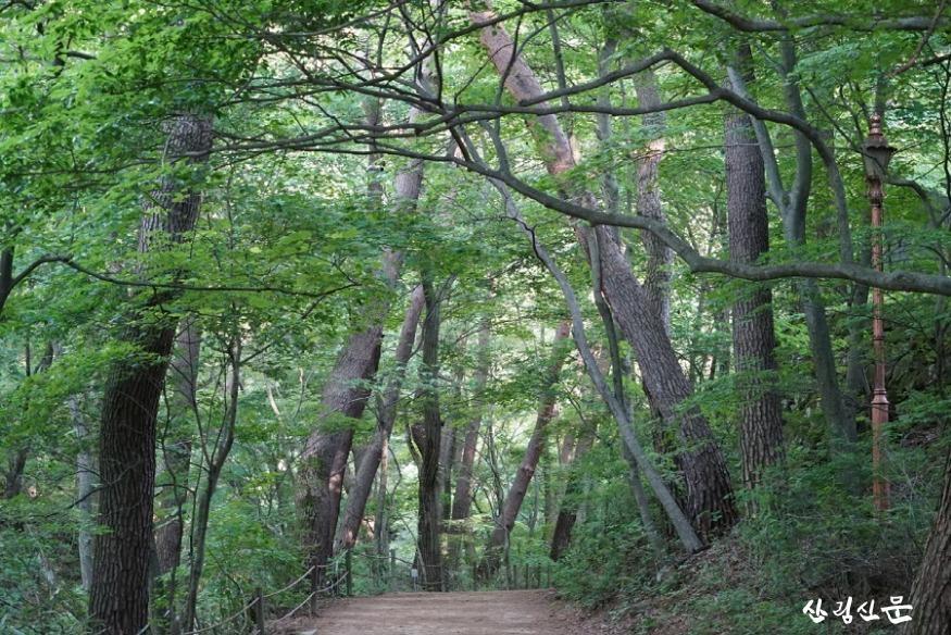 황장목숲길.jpg