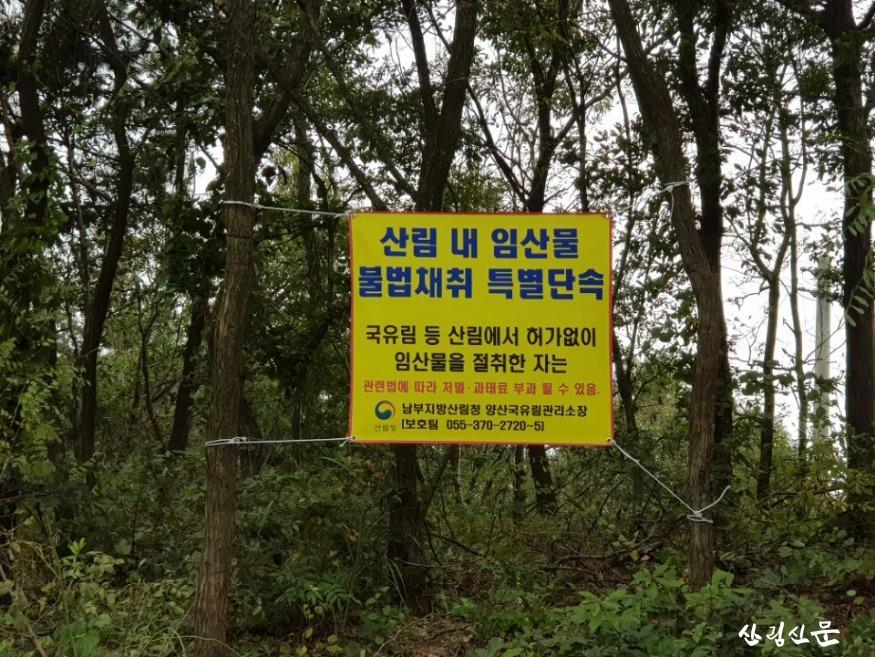 (20190911)_가을철 산림 내 불법행위 특별단속 사진.jpg