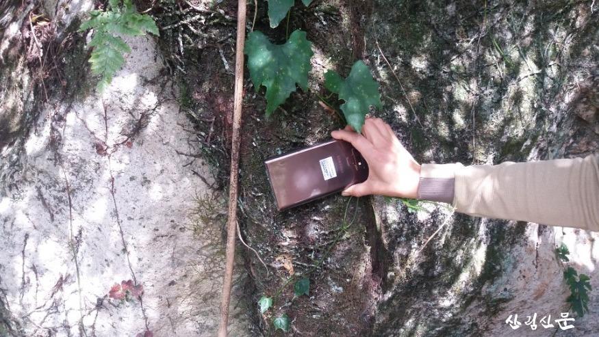 줄사철나무 (2).JPG