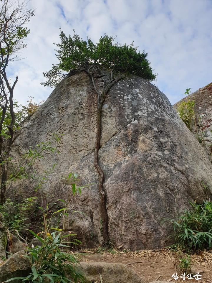 줄사철나무 (3).JPG