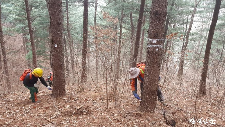 소나무재선충병 예방나무주사 방제작업 사진_1.jpg