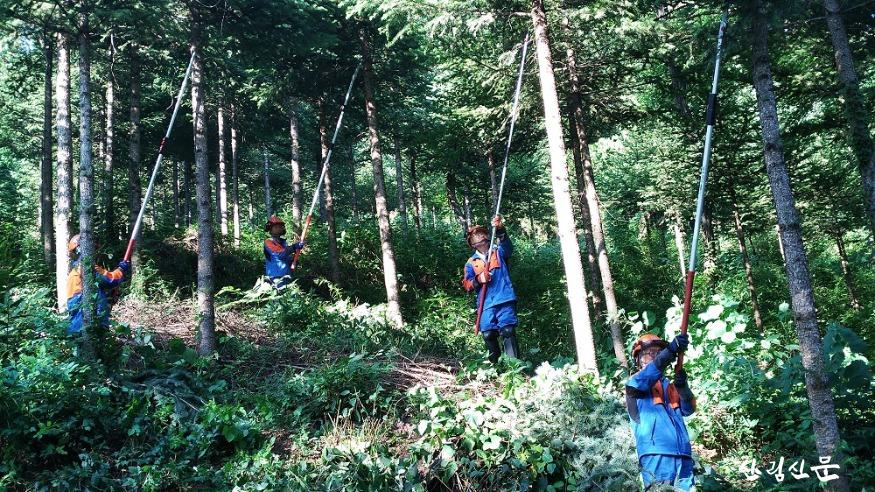 숲가꾸기(가지치기) 작업하는 산림작업자들.jpg