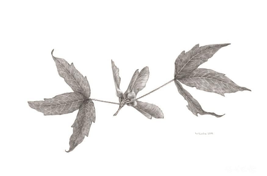 김윤하_식물세밀화 연필.jpg