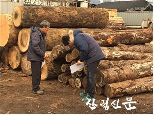 [관련사진] 봄철 소나무류 이동 특별단속 실 시(원목 침입공, 탈출동 유무 확인).jpg