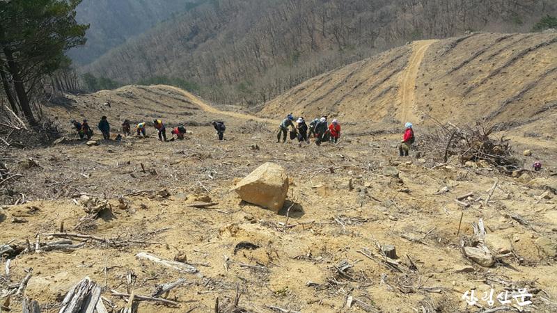 나무심기사업 -1.png