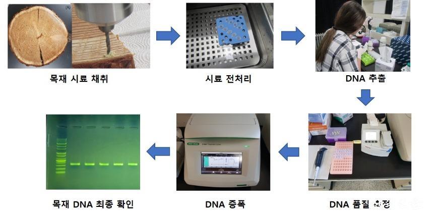 목재 DNA 추출 과정.jpg