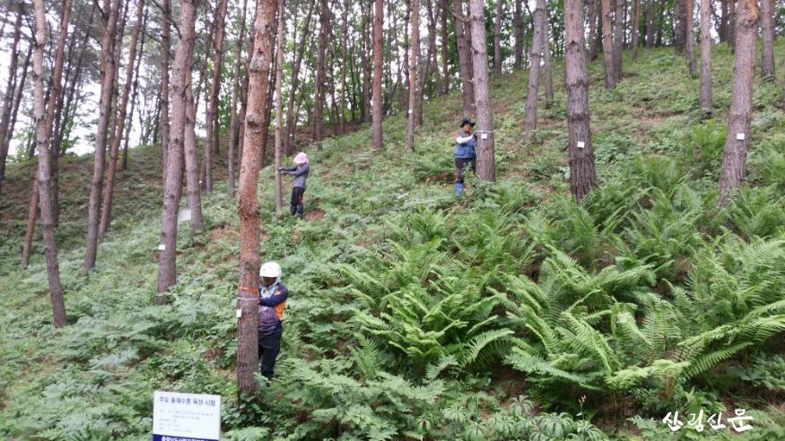 소나무 시험림에서 수작업으로 산림조사를 하는 연구팀.jpg