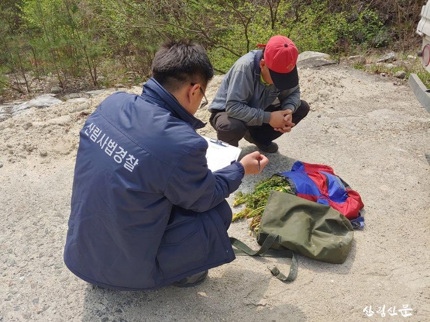 (관련사진) 북부지방산림청, 봄철  산림 내 불법행위 집중단속3.jpg