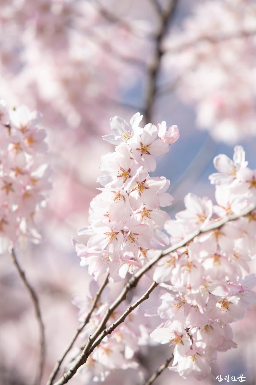 올벚나무_03.jpg