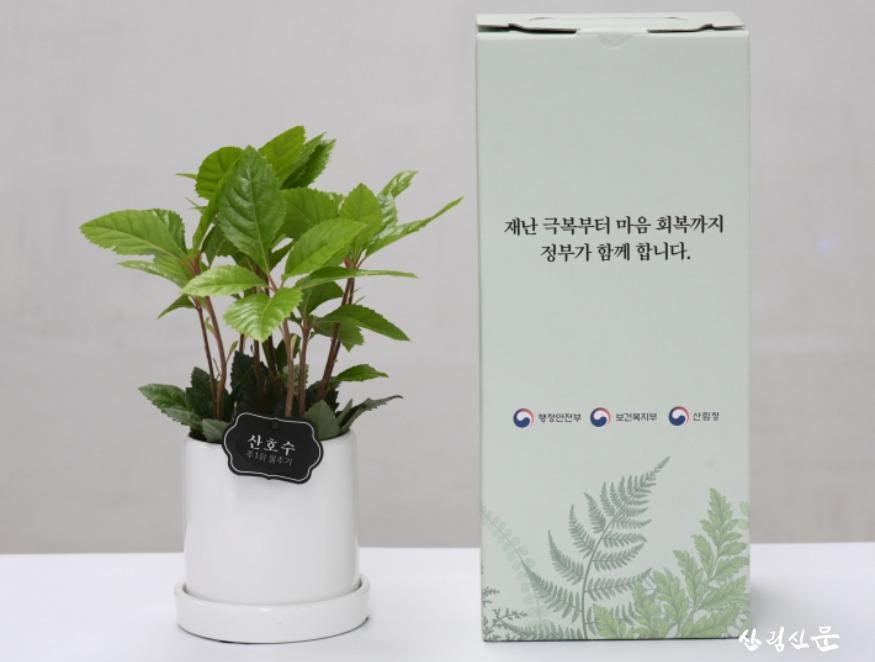사진2_재난심리회복지원협력_반려식물_4.JPG