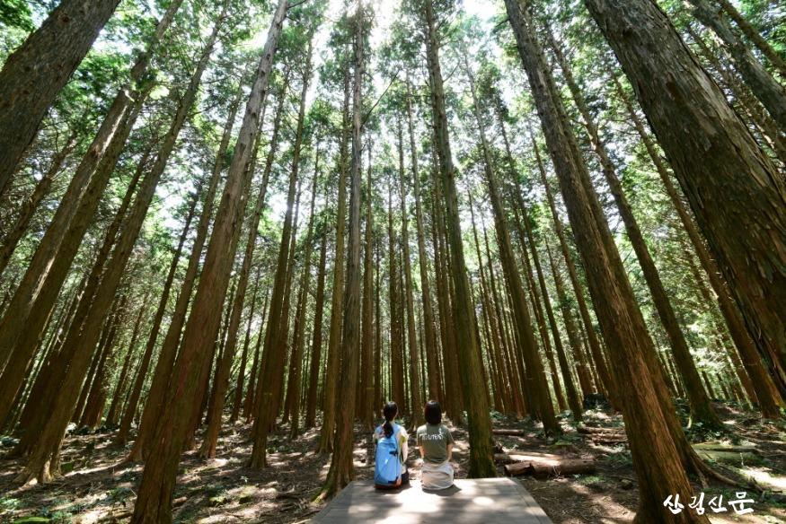 편백 숲 아래서.JPG