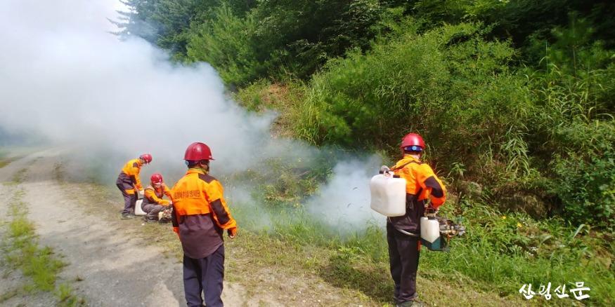 (참고사진) 산림병해충 연무방제.jpg