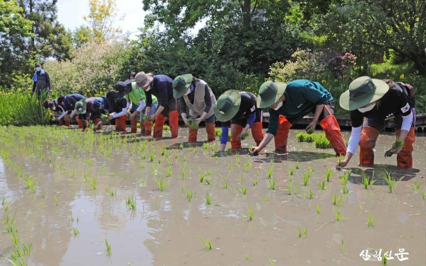 천리포수목원 직원 및 교육생이 수목원 내 오리농장에서  못줄을 띄워 모내기를 하고 있는 모습 (1).jpg