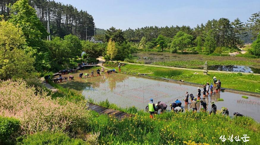 천리포수목원 직원 및 교육생이 수목원 내 오리농장에서  못줄을 띄워 모내기를 하고 있는 모습 (2).jpg