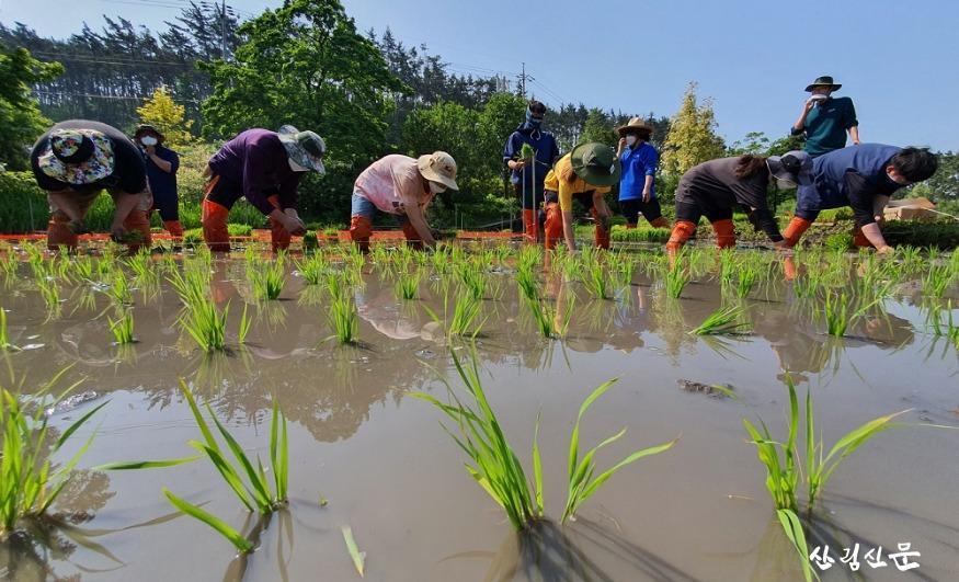 천리포수목원 직원 및 교육생이 수목원 내 오리농장에서  못줄을 띄워 모내기를 하고 있는 모습 (4).jpg