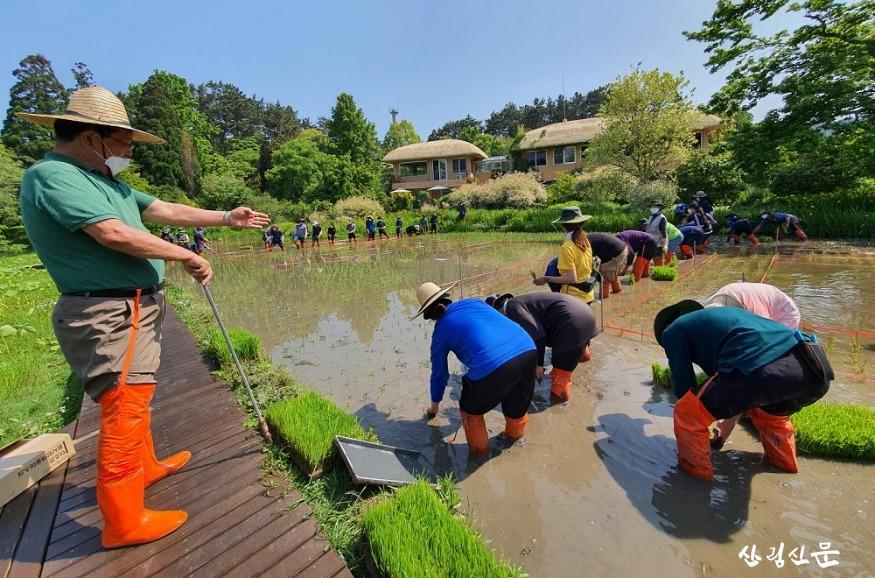 천리포수목원 직원 및 교육생이 수목원 내 오리농장에서  못줄을 띄워 모내기를 하고 있는 모습 (5).jpg