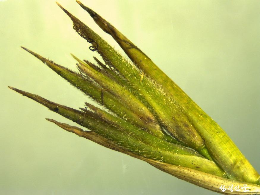 04_대나무 꽃(현미경).jpg