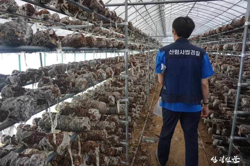 관련사진1-버섯종균접종배지 사용 농가 조사.JPG