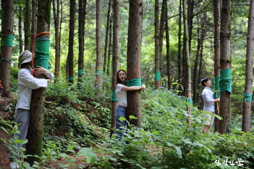 사진1_국립산림치유원 산림치유프로그램(잣나무 숲길).JPG
