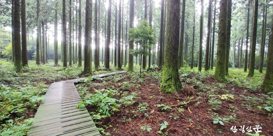 대한민국 명품 숲이 있는 한남연구시 험림 내 탐방구간 삼나무전시림.jpg