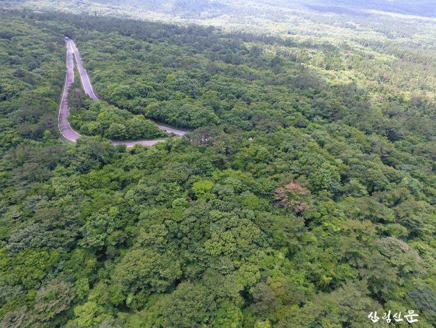 대표사진_드론을 활용한 산림병해충예찰.JPG