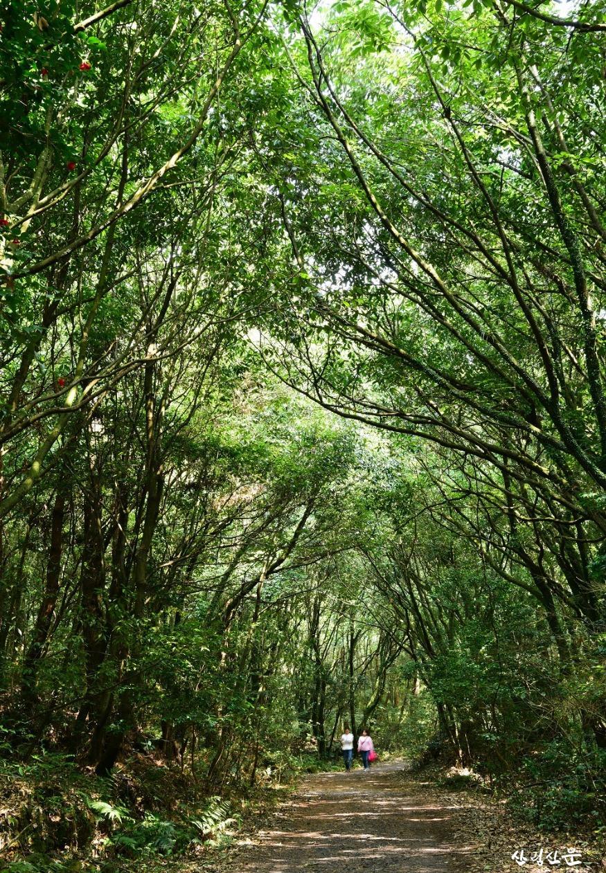 시원한 곶자왈 숲 1.jpg