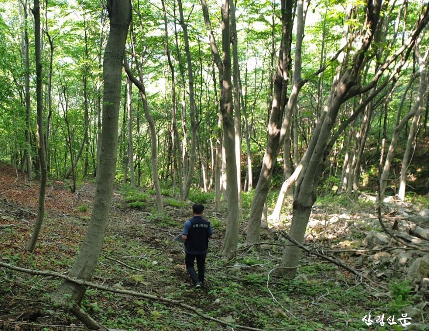 가을철 산림 내 불법행위 집중단속(사진).jpg