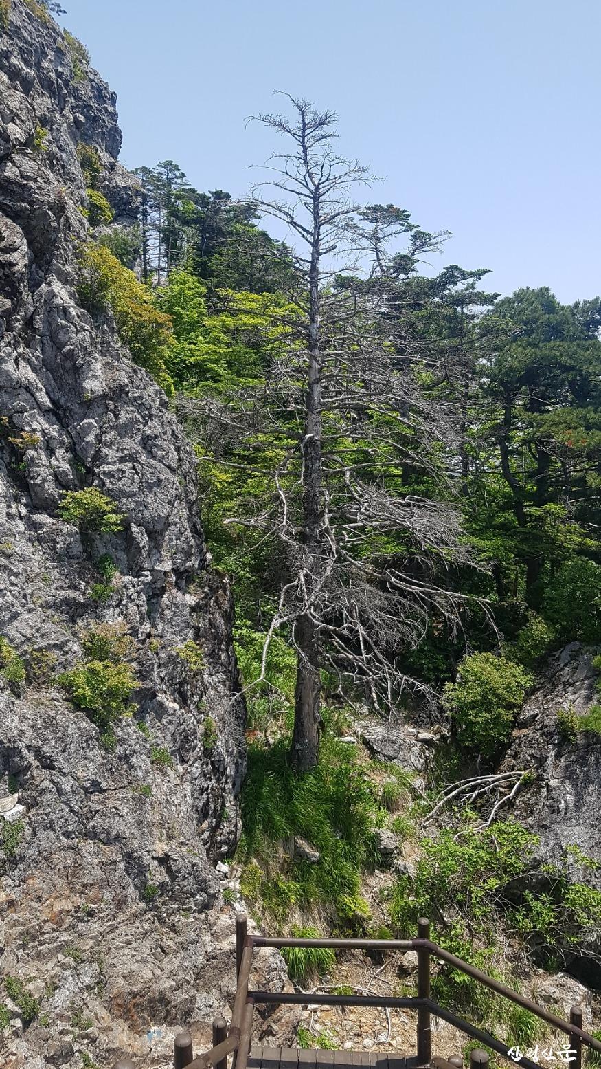 2.지리산 구상나무 고사.jpg
