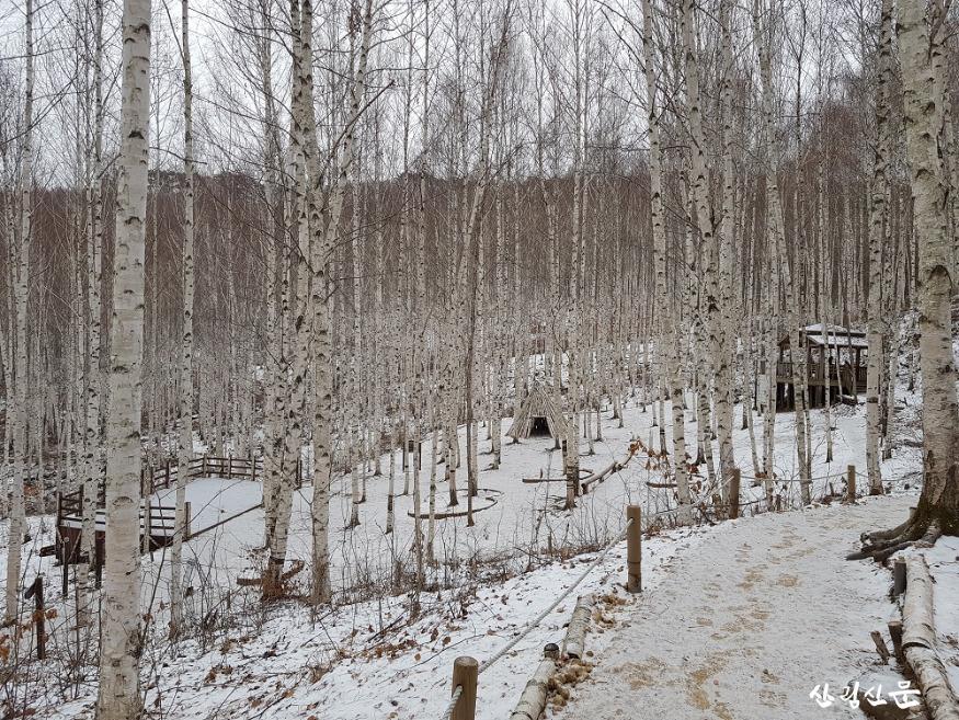 겨울 인제 자작나무 숲 경관 2.jpg