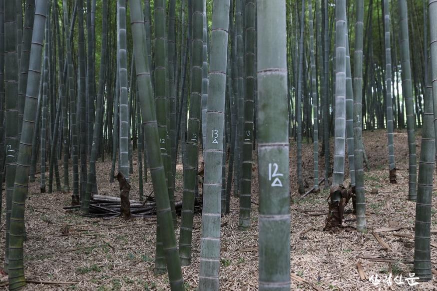 대나무 사진.JPG