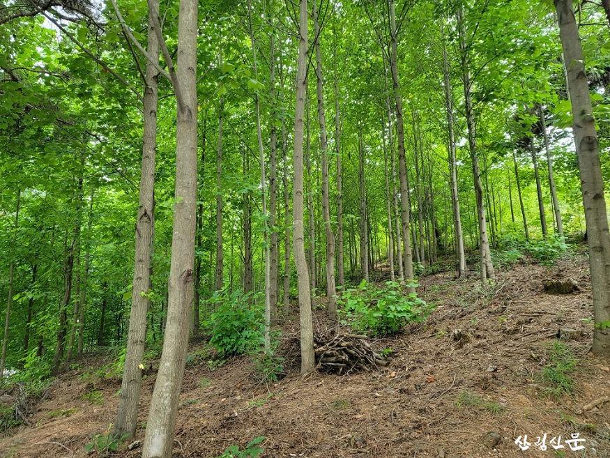 사진2_우리가 키운 우수조림지 백합나무 근경.jpg