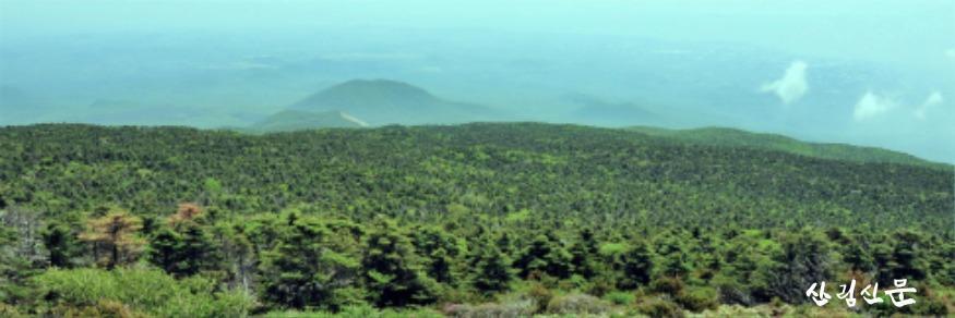 1.한라산 구상나무림 2009년.jpg