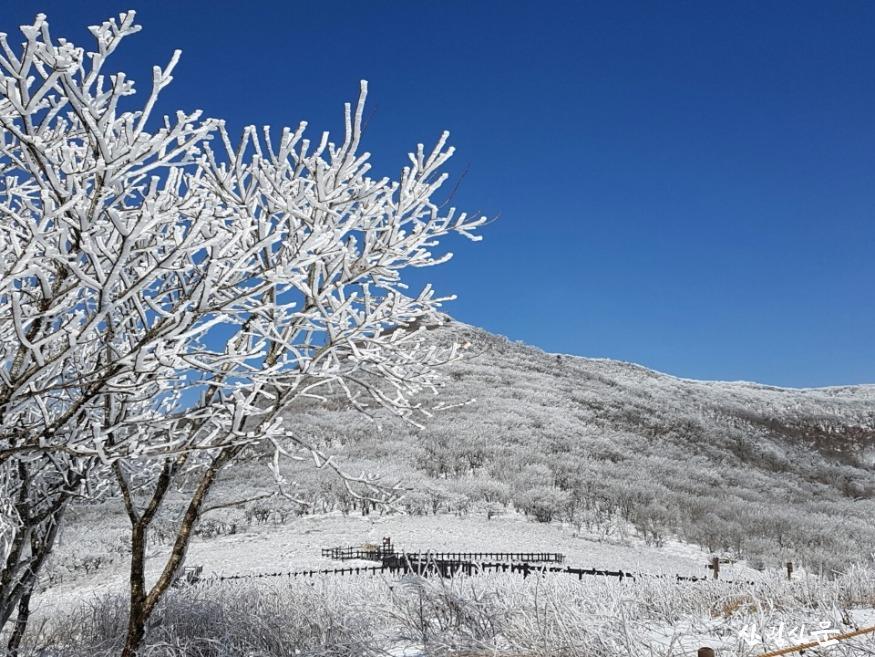 [관련 사진 2] 북부청 관내 산림유전자원보호구역 곰배령.jpg