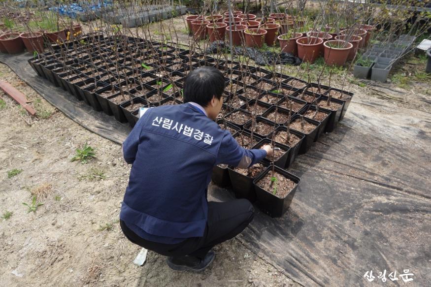 2.[사진자료] 산림용 종자 유통조사 실시.JPG