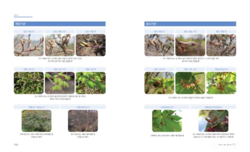 첨부2_당단풍나무 매뉴얼.jpg
