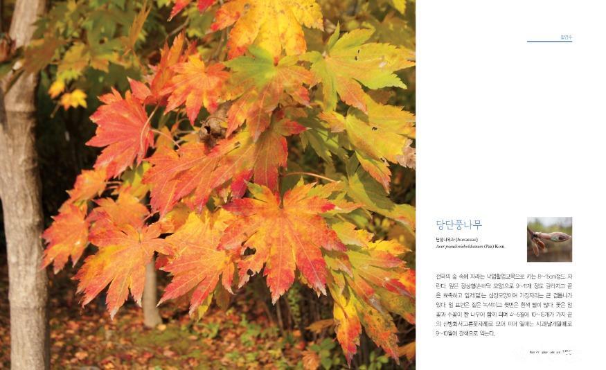 첨부2_당단풍나무 표지.jpg