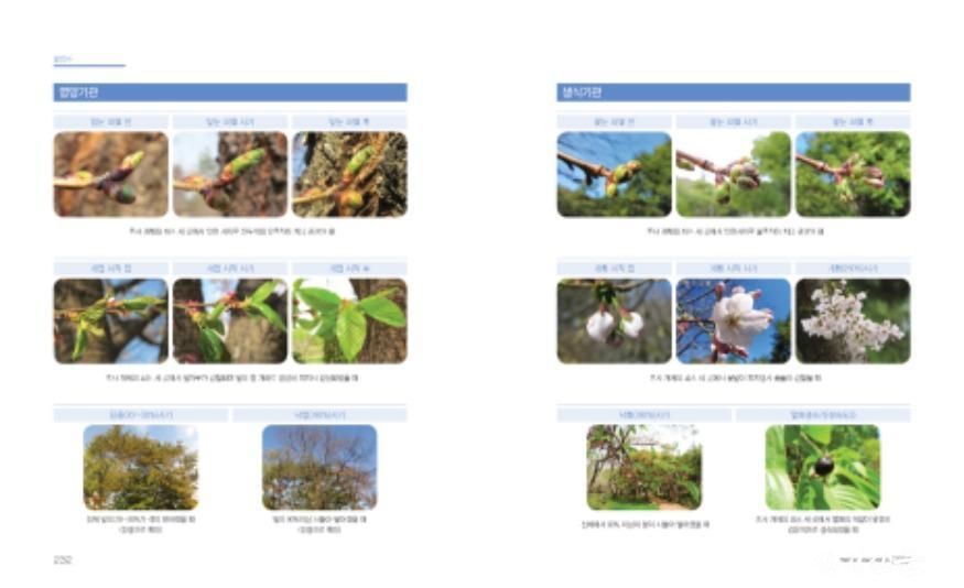 첨부2_왕벚나무 매뉴얼.jpg