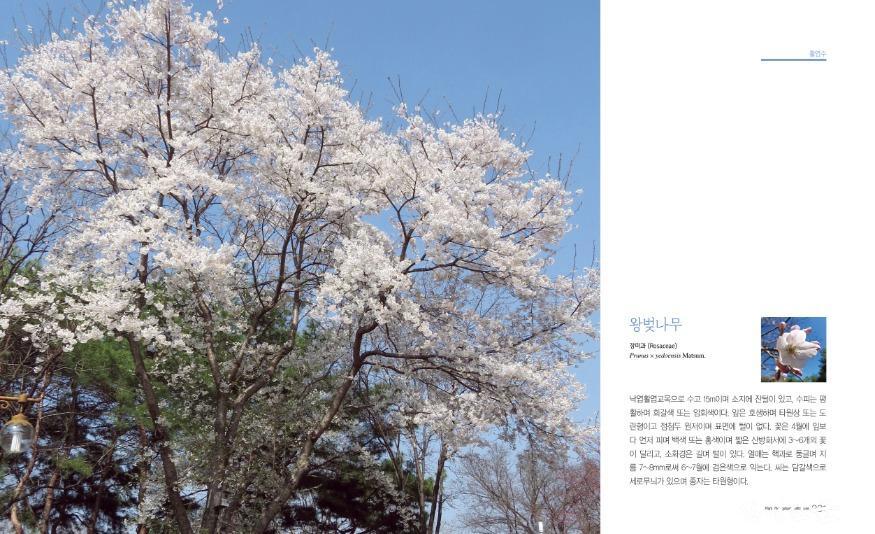 첨부2_왕벚나무 표지.jpg