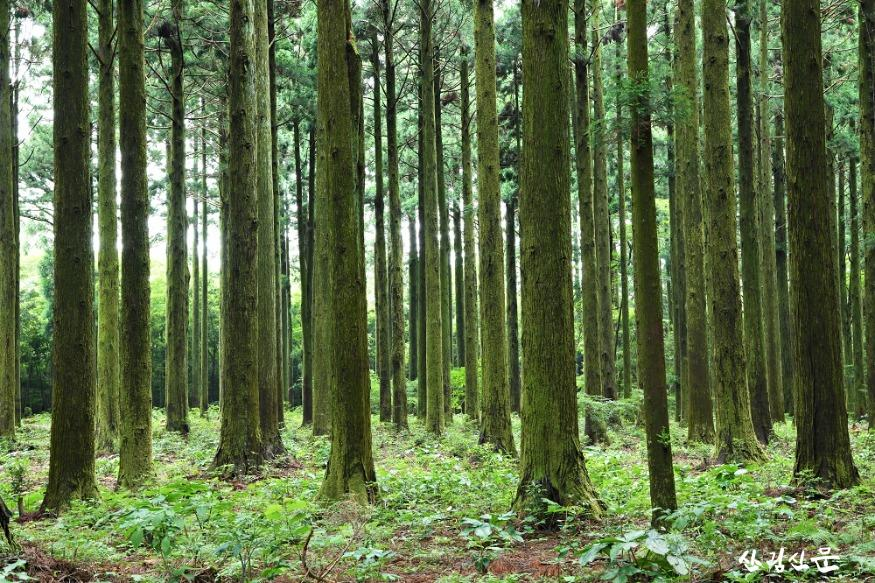 산림문화자산.jpg