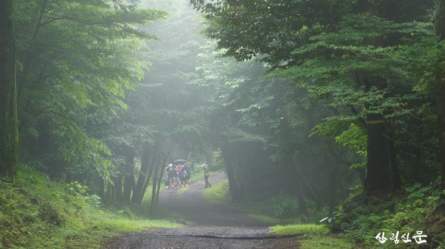 샤려니 숲체험.JPG