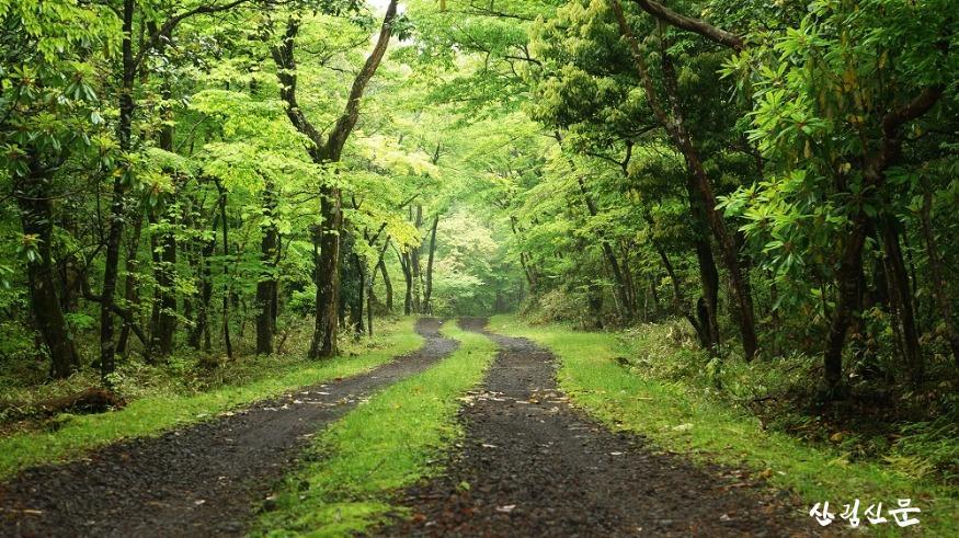 샤르니 숲.jpg