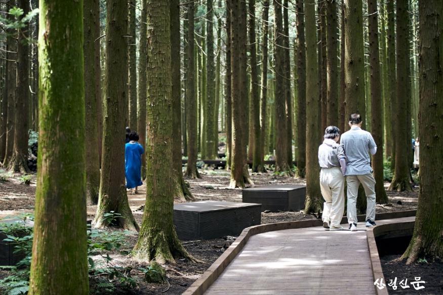 사진4_무장애나눔길 조성사업(제주도  서귀포시 사려니숲 무장애나눔길).jpg