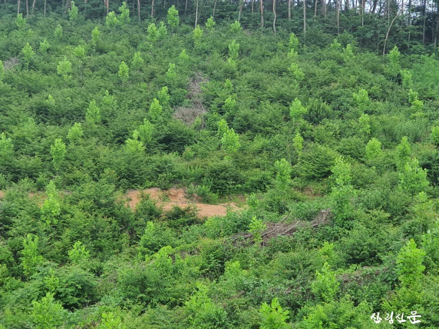 밀원수(백합)조림지 2.jpg