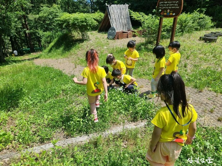 민북지역국유림관리소 배꼽유아숲 체험원 활동사진 (1).jpg