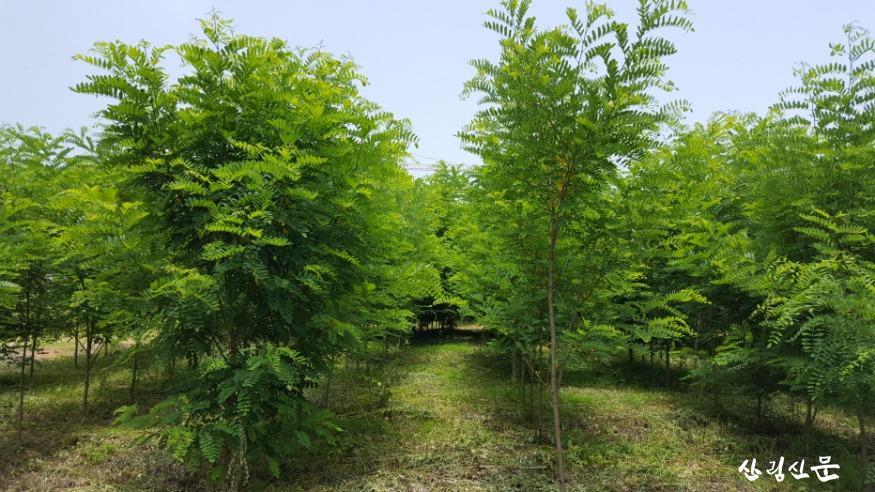 아까시나무 클론 보존원.jpg