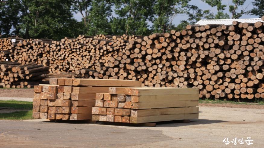 아까시나무 목재.JPG