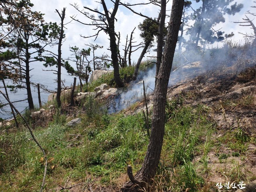 (산림청 제공) 충남 보령 산불 현장.jpg